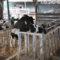 Unfälle: Sicherer Umgang mit Deckbullen