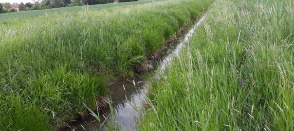 gewässerrandstreifen
