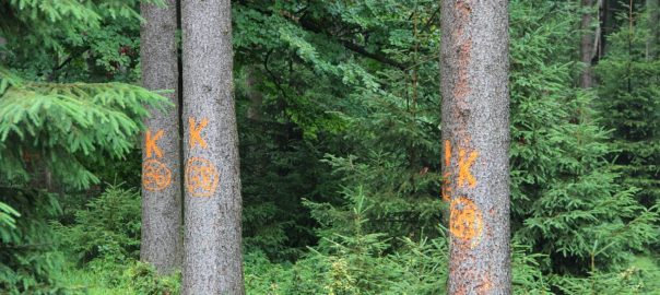 borkenkäferholz